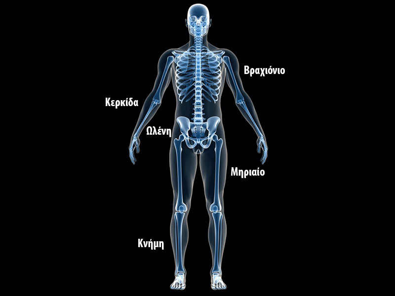κατάγματα μακρών οστών